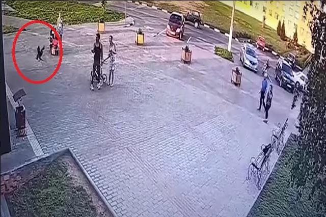 Captan a cuervo robando dinero; se abre una causa penal en contra de la 'víctima'