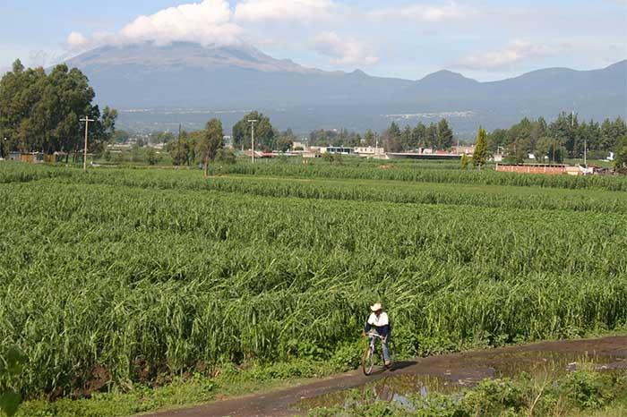 Aplicará Puebla seguro agropecuario catastrófico por contingencias