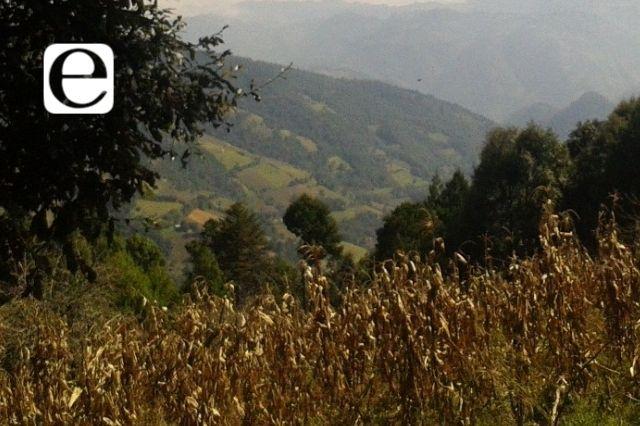 Cambio climático afecta 2 mil hectáreas de cultivo en Tehuacán