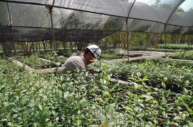 Cycna de Oriente reporta sus prácticas sustentables en la ONU