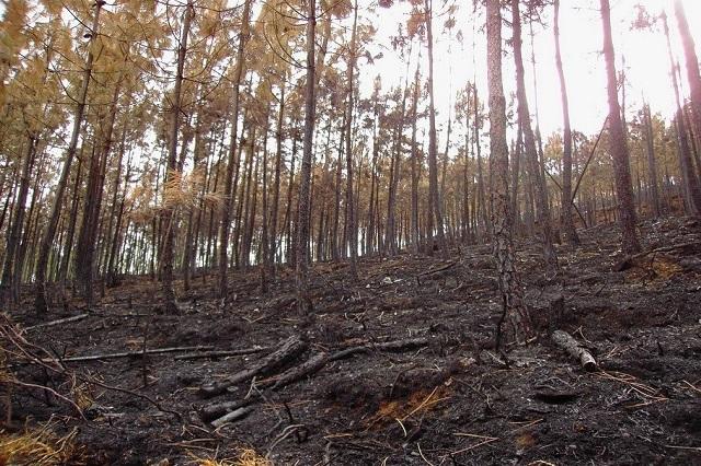 Abren plataforma para evaluar impacto ambiental de proyectos en Puebla