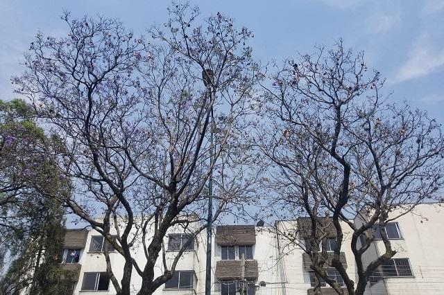 Plaga en árboles de la 14 Sur en Puebla alarma a vecinos