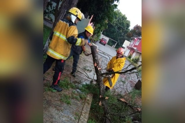 Árboles caídos y otros daños por lluvias en Huauchinango