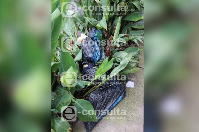 Dejan cadáver embolsado en una jardinera de La Libertad