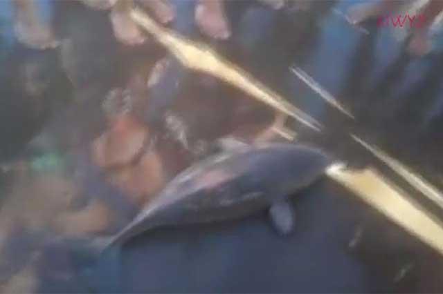 Muere delfín con el que turistas se tomaron selfies
