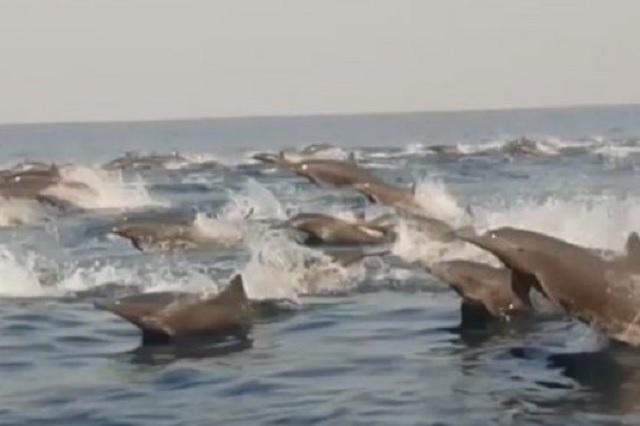 Vuelven delfines a costas de Oaxaca tras ausencia de turistas