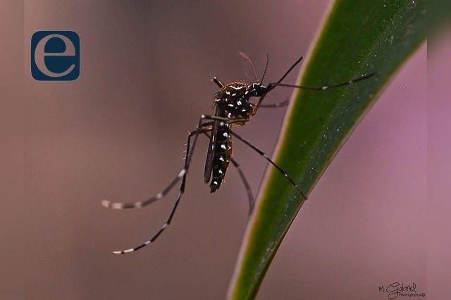 """Tehuacán """"foco rojo"""" por aumento del mosco del dengue"""