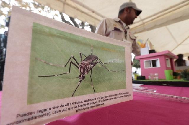 Van a la alza casos de dengue en Puebla, advierte Salud federal