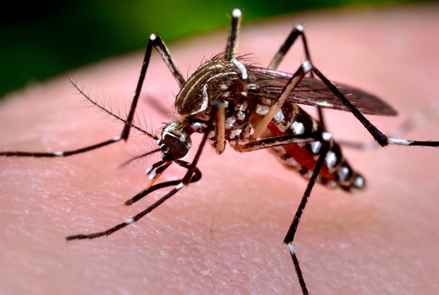 Epidemia de dengue es analizada con modelo matemático