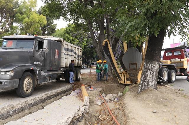 Gobierno revisa si inmobiliaria cumplió con reponer árboles