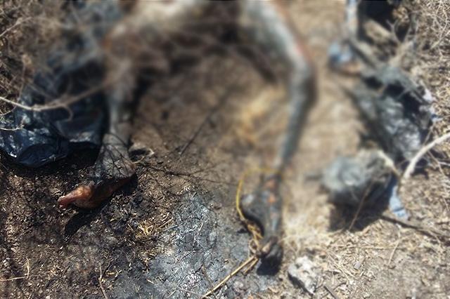 Hallan cadáver calcinado y en descomposición, en Tecamachalco
