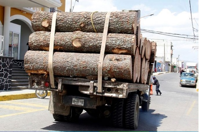Detectan en el país 122 zonas críticas por delitos forestales