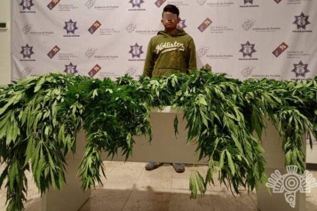 Lo detienen con cuatro kilos de marihuana en Tepanco de López