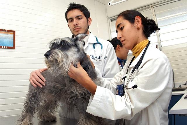 17 de agosto: Celebran el Día del Médico Veterinario