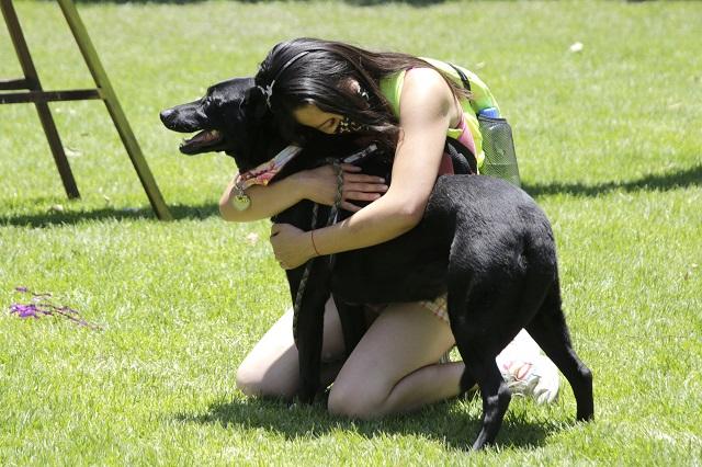 El 21 de julio se celebra el Día Mundial del Perro, ¿sabes por qué se creó?