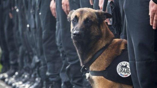 Indigna asesinato de perra policía por presuntos terroristas en Francia