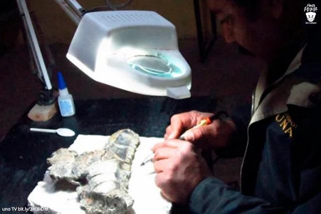 Descubren dinosaurio de cresta alargada que vivió en México