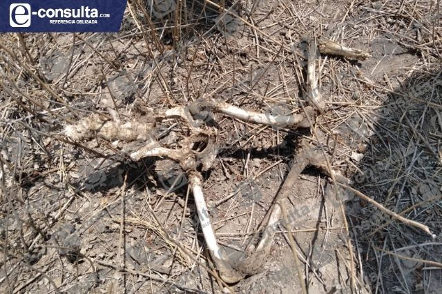 Encuentran restos óseos de niño en Tecamachalco