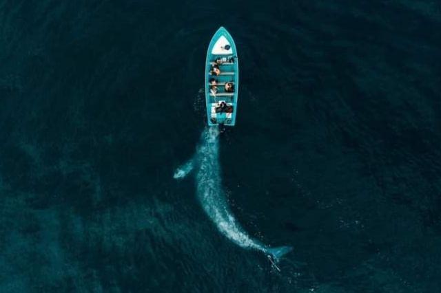 Tehuacanero galardona fotografía de una ballena a nivel mundial