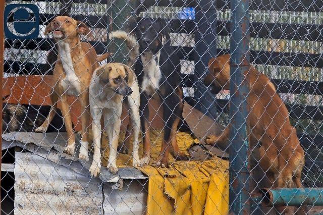Durante la pandemia aumenta el abandono de perros en Atlixco