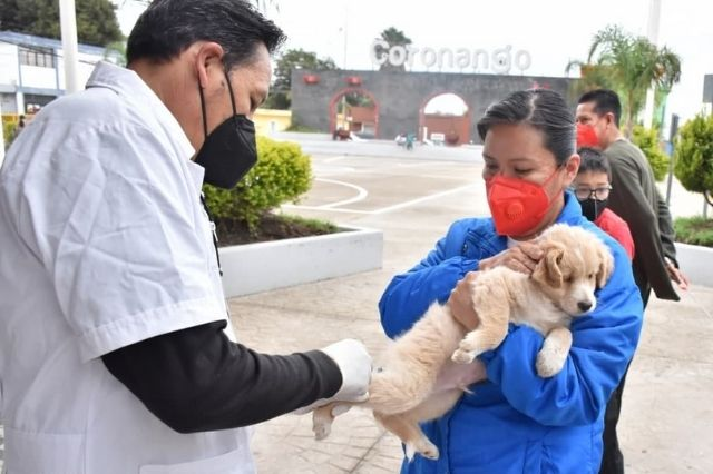 Coronango aplica vacunas contra la rabia a perros y gatos