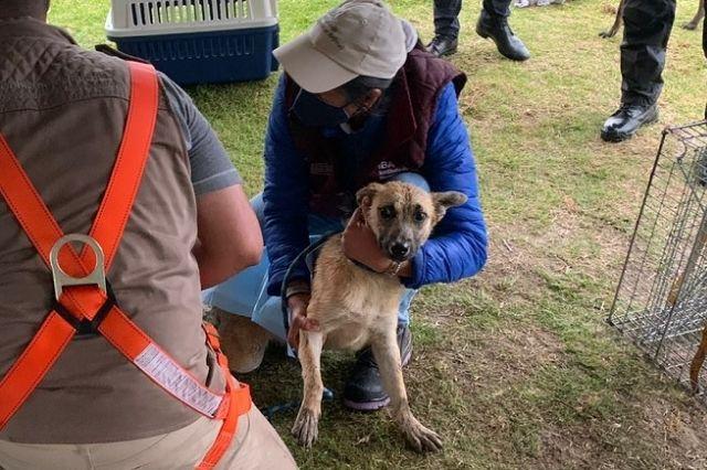 Spike sigue sin encontrar hogar, tras su rescate del socavón