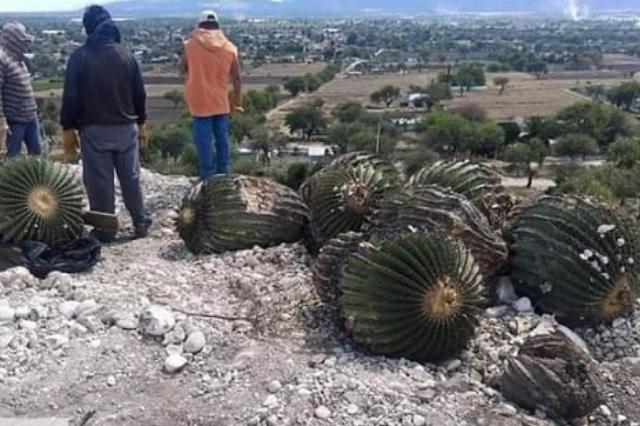 Rescatan la flora protegida del parque El Riego de Tehuacán