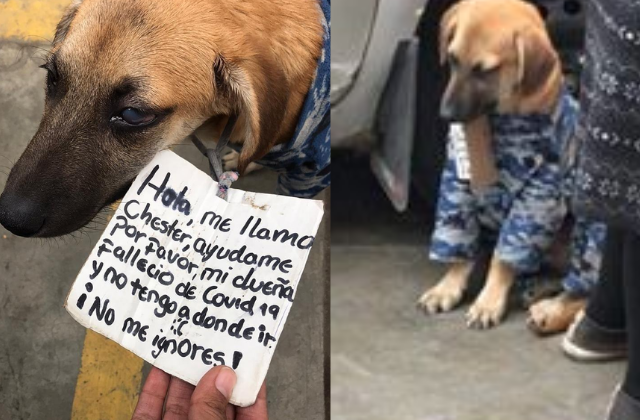 Perrito queda en el abandono: su dueña murió por covid