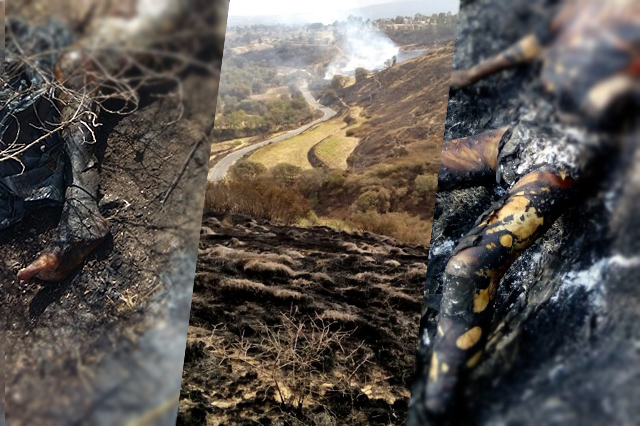Aparecen 3 cuerpos calcinados en Tecamachalco, El Verde y Tlalancaleca