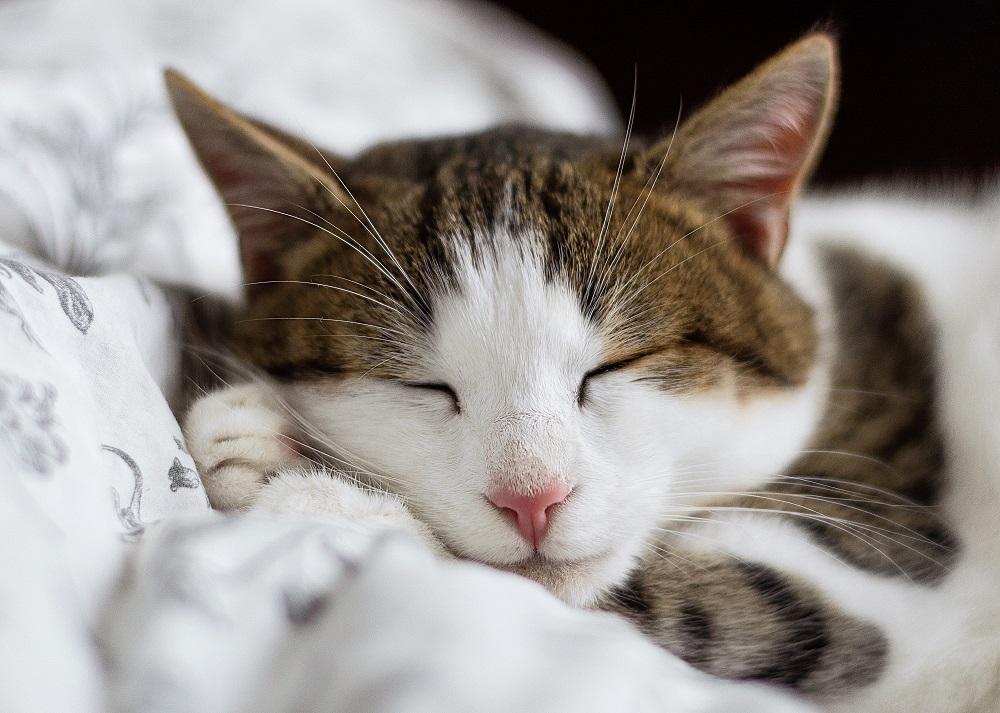 Dormir bien en invierno, necesidad orgánica