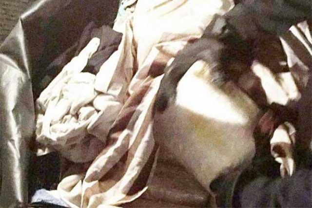 PF asegura 24 kilos de droga en autobús en Sinaloa