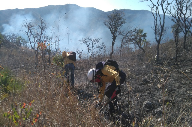 Incendios forestales sólo han consumido hierba y matorrales: Conafor