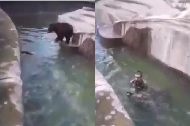 Hombre ebrio irrumpe en zoológico y trata de ahogar a un oso