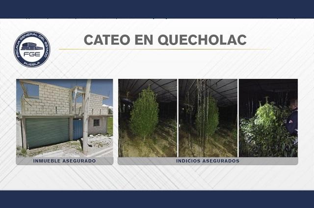 Sembraban plantas de marihuana en invernadero de Quecholac