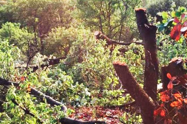 Constructora tala árboles en La Calera, denuncian vecinos