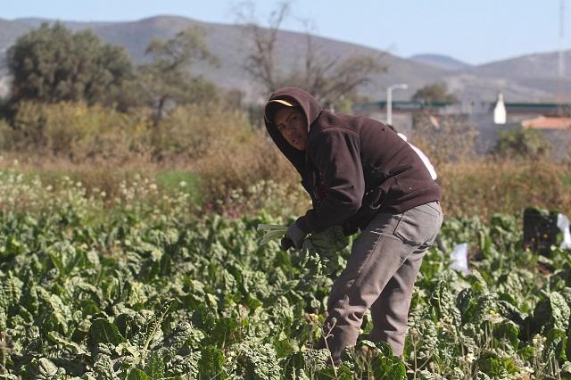 Escasa inversión en el campo agudiza migración, acusa diputado Julian Peña