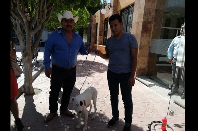 Hallan vivo a Ningo, el perro al que cortan la cola con tijeras en Puebla