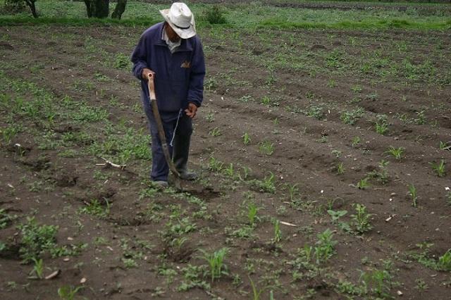 Ejidatarios denuncian irregular reparto de tierras en Guadalupe Tecola