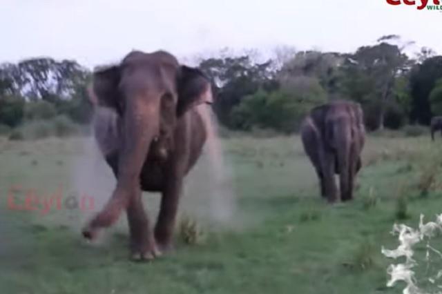 Elefantes salvajes atacan a grupo de turistas en la India
