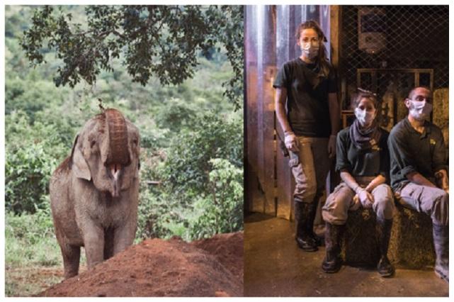 Celebran Día Mundial del Elefante, mira estos consejos