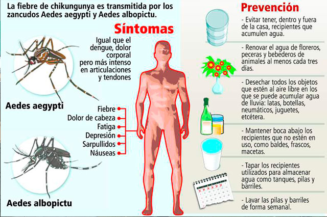 Científicos poblanos también buscan vacuna para el Chinkungunya