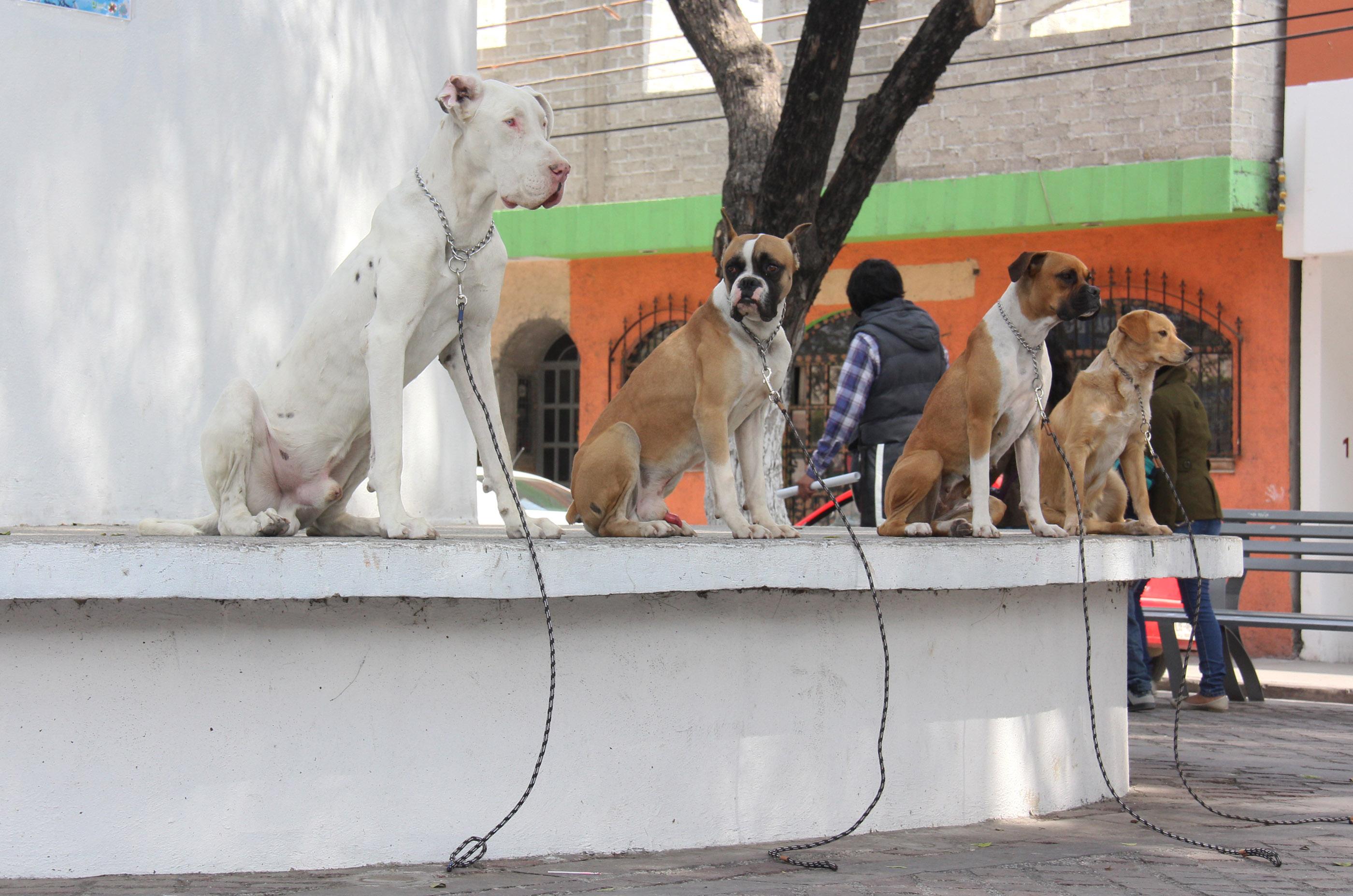 Denuncian maltrato animal en tres centros de atención canina