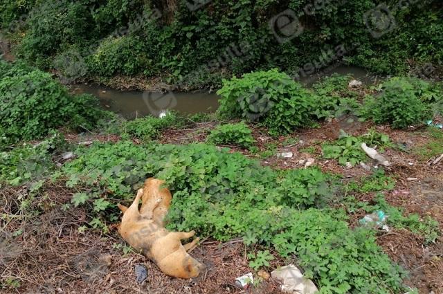 En solo 6 días envenenan a decenas de perros en Zacapoaxtla