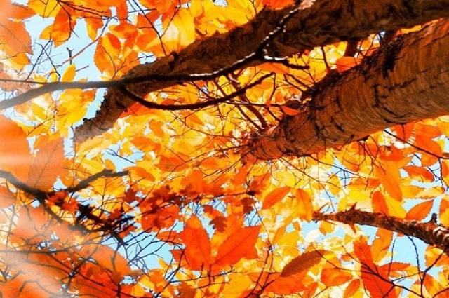 Inicia el otoño en México: 3 datos de este fenómeno astronómico