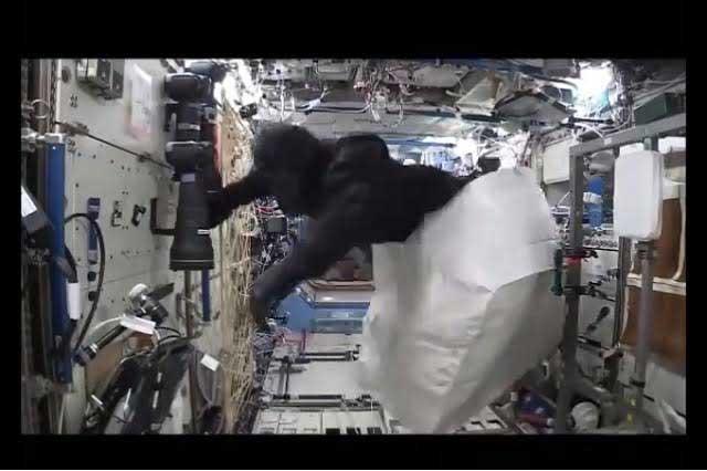 ¿Un mono en el espacio? La NASA comparte video de persecución