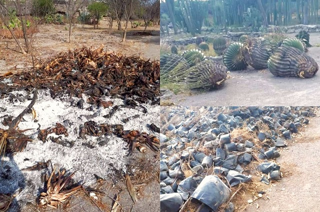 Especies protegidas mueren en Tehuacán por falta de agua