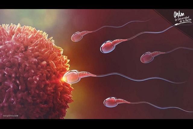 Expertos observan movimiento de espermatozoide en 3D
