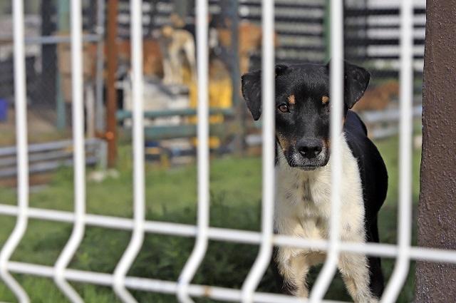 Aprueban 4 años de cárcel por secuestrar a mascotas en Puebla