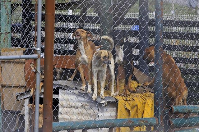 Sacrificarán a cinco perritos: mataron a un hombre