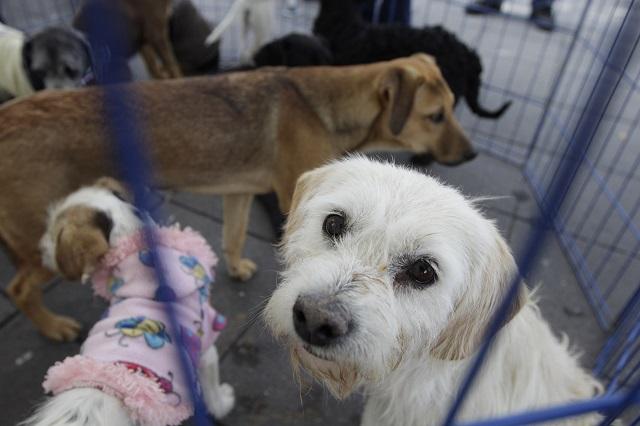 Plantean centros de eutanasia para mascotas en Puebla